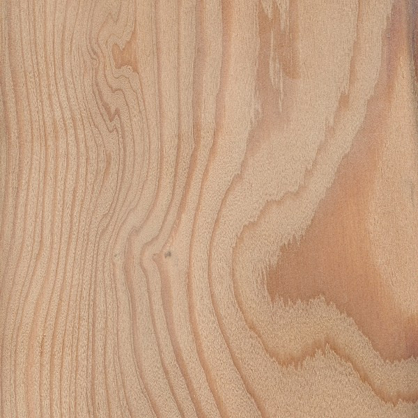 150 x 50mm Siberian Larch KD ( Sawfalling ).