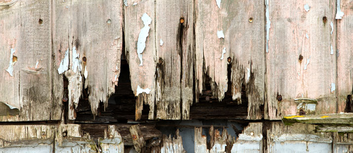 fence rot